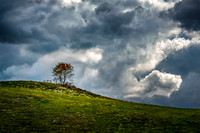 A solitary tree on a hilltop in Elk Creek, VA